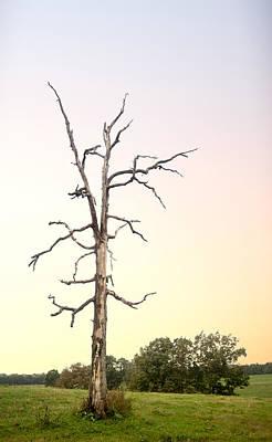 Sunrise On Ghost Tree Art Print by Douglas Barnett