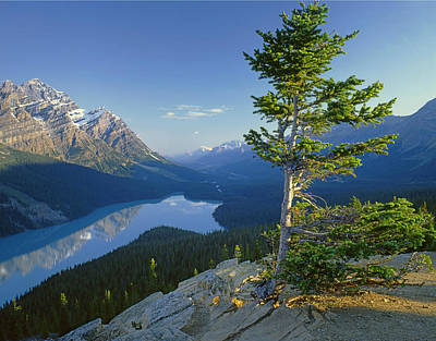 Photograph - 1m3608-sunrise On Peyto Lake by Ed  Cooper Photography