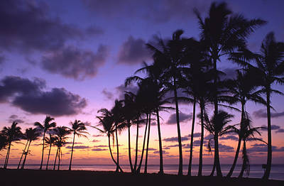 Photograph - Sunrise On The Coconut Coast by Morris  McClung