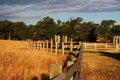 Sunrise On The Fence Art Print by Michele Richter