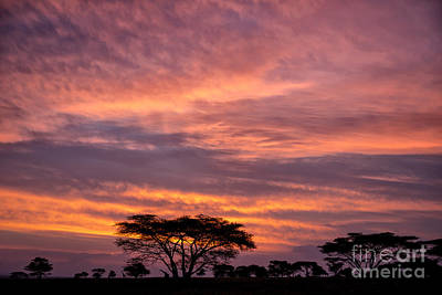Photograph - Sunrise On The Serengeti by Sandra Bronstein