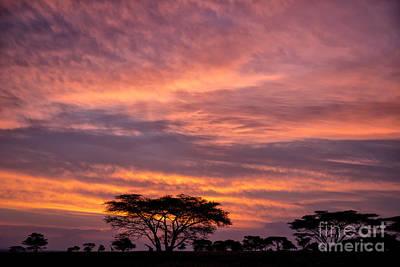 Photograph - Sunrise On The Serengeti by Sandra Bronstein