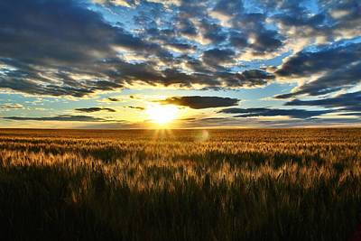 Sunrise On The Wheat Field Art Print by Lynn Hopwood