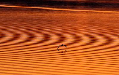 Photograph - Sunrise Osprey by Lawrence Scott