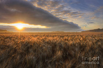 Sunrise Over Barley Art Print by Dan Jurak