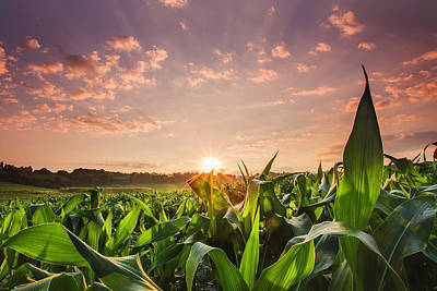 Photograph - Sunrise Over Field Of Crops In France by Verity E. Milligan