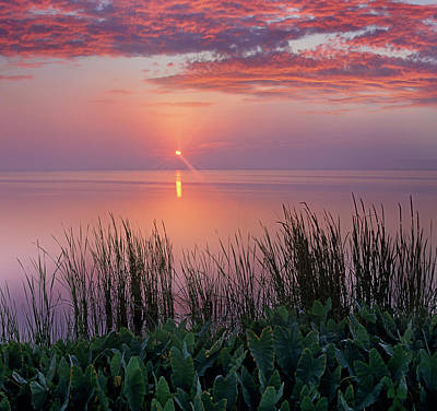 Indian River Photograph - Sunrise Over Indian River Marsh by Tim Fitzharris