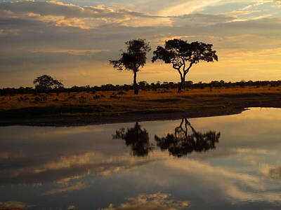 Photograph - Sunrise Over Savuti Park by Gregory Daley  PPSA