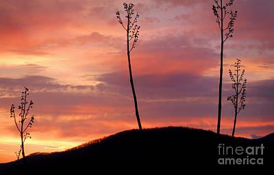 Sunrise Over The Great Smoky Mountains Art Print by Glenn Morimoto
