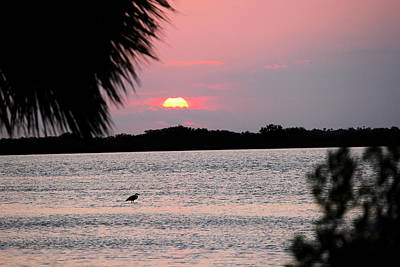Photograph - Sunrise Over The Indian River by Suzie Banks