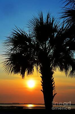Photograph - Sunrise  Palm Tree by Kathy Baccari