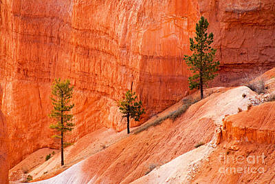 Catch Of The Day - Sunrise Point Bryce Canyon National Park by Fred Stearns