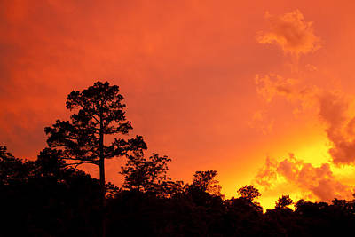 Photograph - Sunrise by Scott Sanders