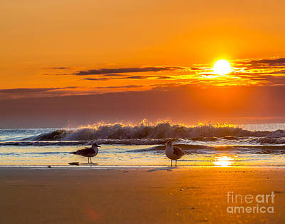 Photograph - Sunrise Seagulls by Mike Covington