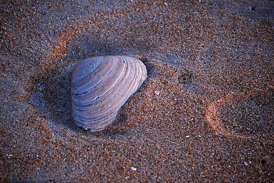 Photograph - Sunrise Shell by John Flack