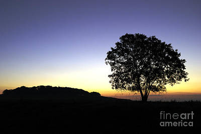 Photograph - Sunrise Silhouette by Doug Wilton