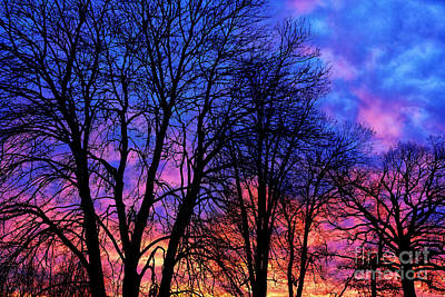 Sunrise Silhouette Art Print by Thomas R Fletcher
