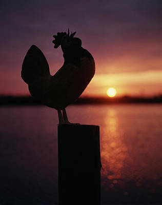 Sunrise Silhouetted Rooster On Post Art Print
