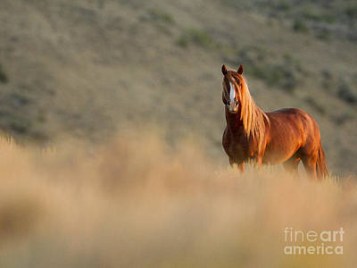 Sunrise Stallion Art Print