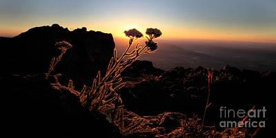 Buckaroo Photograph - Sunrise Steens Mountain Oregon by Michele AnneLouise Cohen