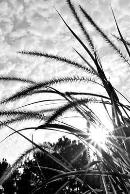Art Print featuring the photograph Sunrise Sunburst by Kelly Nowak