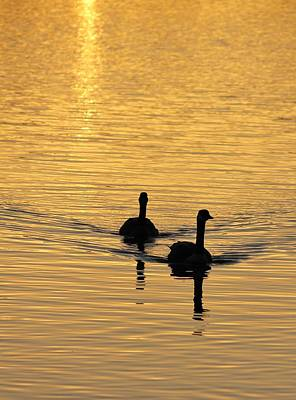 Photograph - Sunrise Swim 1 by Diane Alexander