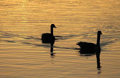 Photograph - Sunrise Swim 2 by Diane Alexander