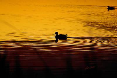 Photograph - Sunrise Swim by Bill Kesler