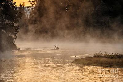 Photograph - Sunrise Swim by Deby Dixon