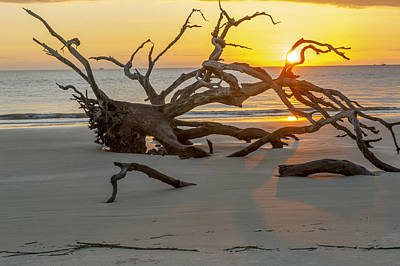 Photograph - Sunrise Through Driftwood On Jekyll Island Ga by Willie Harper