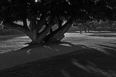 Photograph - Sunrise Through Old Tree by Inge Riis McDonald