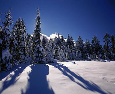 Sunrise Through Snow Covered Fir Trees Art Print