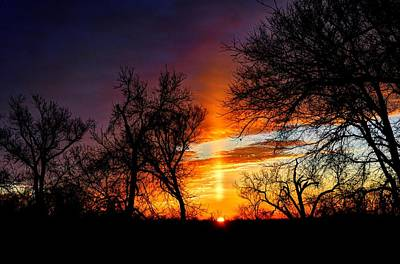 Sunrise Through The Cottonwoods Art Print