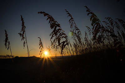 Photograph - Sunrise Through The Grass by Anthony Doudt