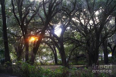 Sunrise Through The Oaks Art Print