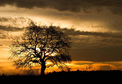 Photograph - Sunrise Tree by Robert Woodward
