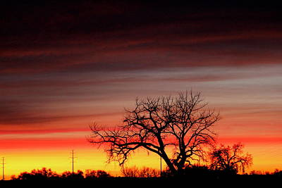 Photograph - Sunrise Tree by Trent Mallett