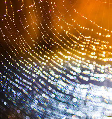 Spiderweb Photograph - Sunrise Web by Aaron Aldrich