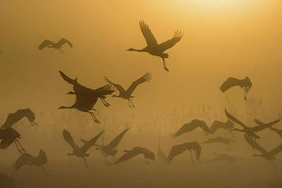 Sunrise With Cranes Art Print