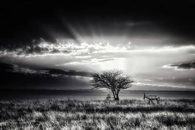 Savannah Photograph - Sunrise With Hartebeest by Piet Flour