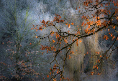 Foliage Wall Art - Photograph - Sunrise's Little Gem by Marek Boguszak