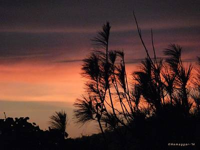 Photograph - Sunset-2-in D.r. by Hemu Aggarwal