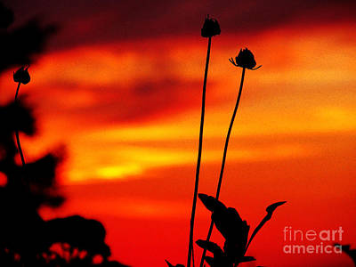 Sunset 365 20 Art Print by Tina M Wenger