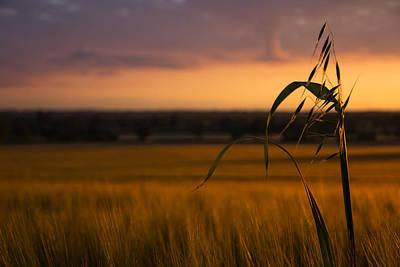 Evening Scenes Photograph - Sunset Admirer by Chris Fletcher