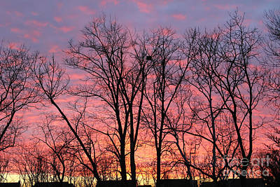 Photograph - Sunset After Christmas by Karen Adams