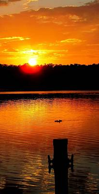 Sunset And Ducks Art Print by Will Boutin Photos