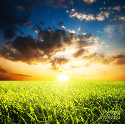 Sunset And Field Of Grass Print by Boon Mee