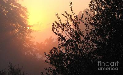 Photograph - Sunset And Fog by Laura Hamill