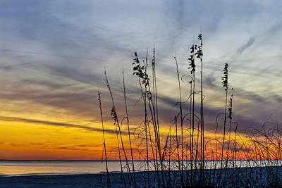 Photograph - Sunset And Grasses by Gej Jones