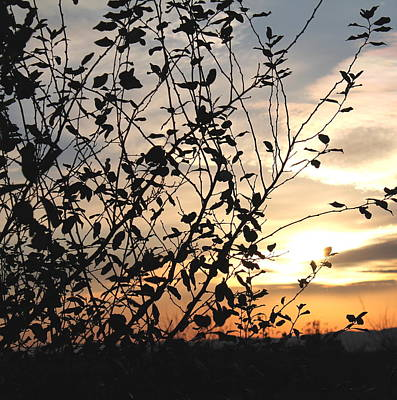 Print featuring the photograph Sunset And Nature's Silhouette by Candice Trimble